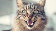HCM – Hypertrophe Kardiomyopathie bei der Katze