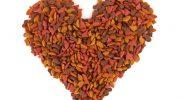Die richtige Fütterung von Herzpatienten