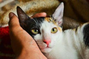 Katze legt Kopf in Hand von Mensch