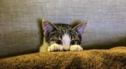 Aortenthrombose – Plötzliche Lähmung der Hinterbeine bei Katzen
