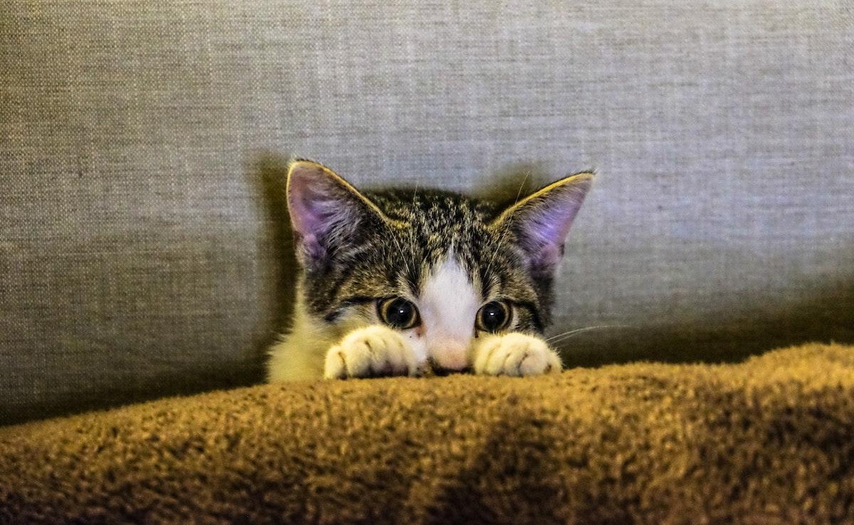 Katze hinter Sofakissen