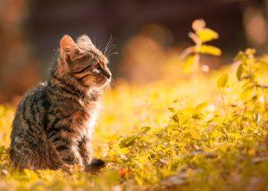 Katzenwelpe im Gras - Leichte Beute für Zecken