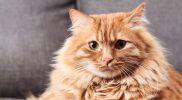Meine Katze hat ein Herzproblem – was jetzt?