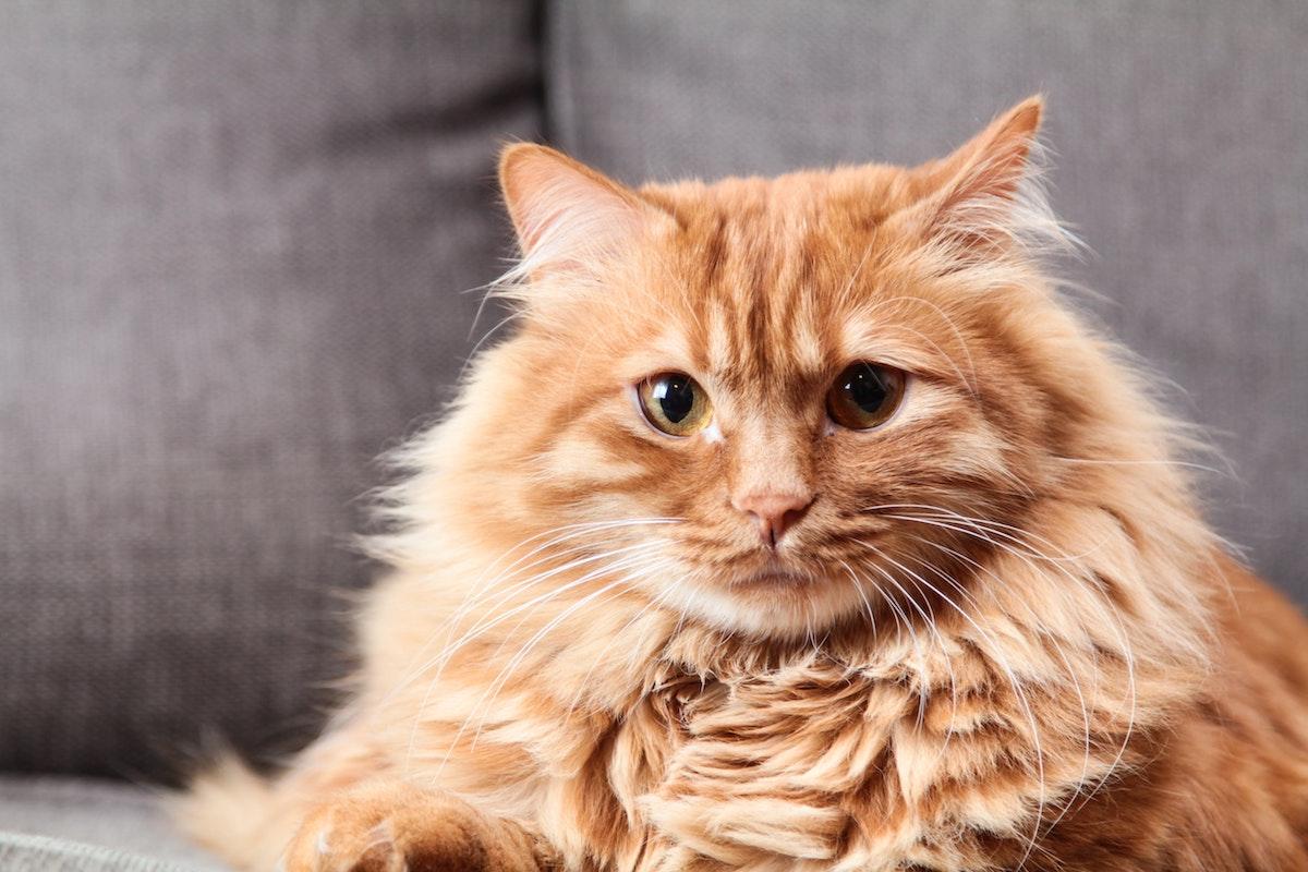 Rot getigerte Katze