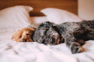 Erhöhte Nierenwerte - schlafende Hunde