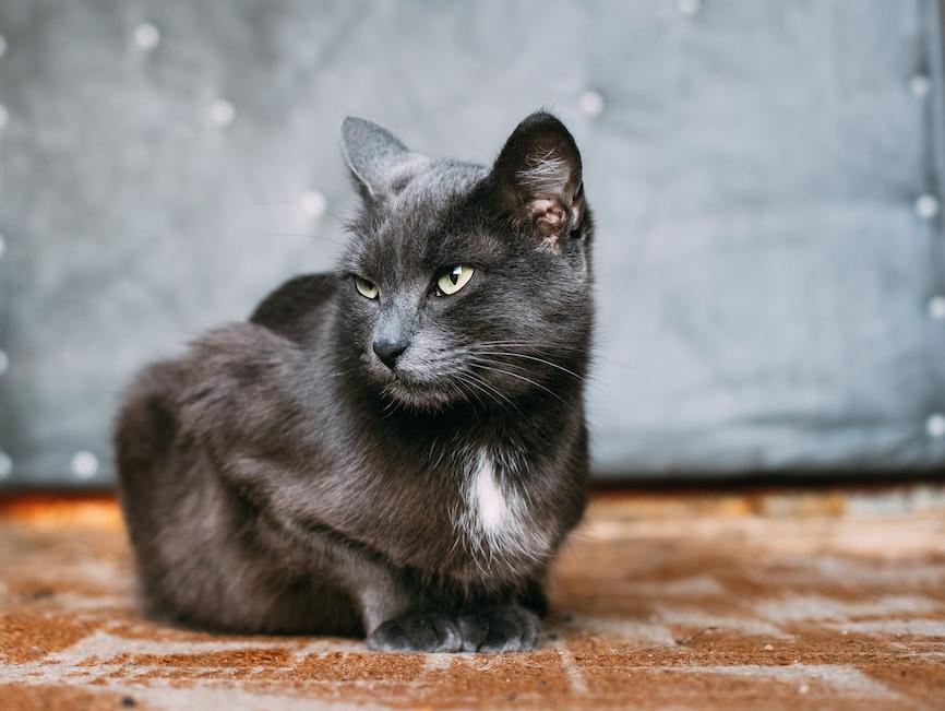 Herzhusten bei de Katze - eher untypisch