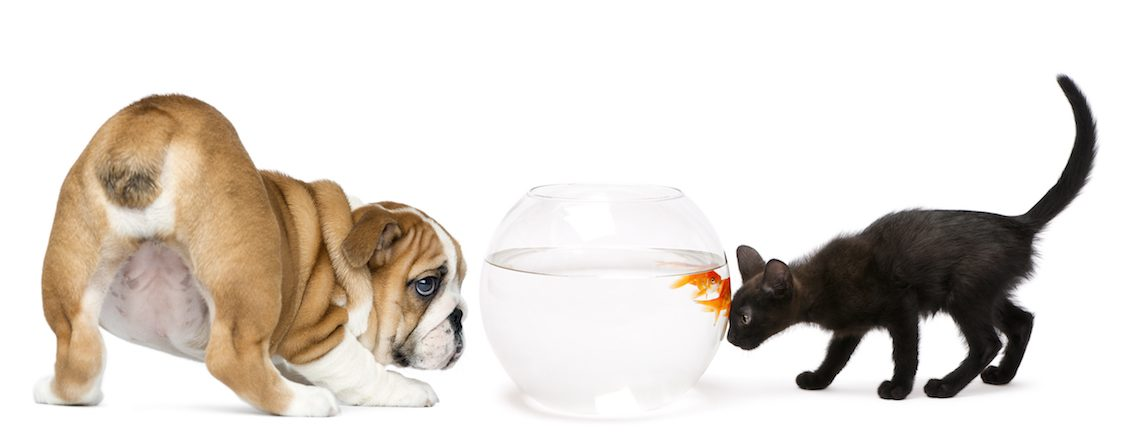 Fischöl, Hund und Katze beobachten Fisch