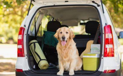 Hund im Kofferraum