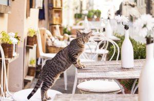 Herzwürmer - Katze in der Toskane am Tisch