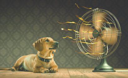 Hitzschlag beim Tier - Hund kühlt vor dem Ventilator ab