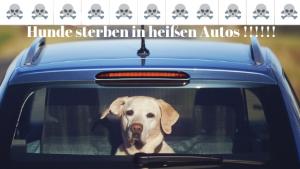 Hitzschlag beim Tier - Hund im Auto