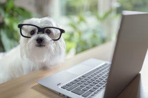 Newsletter Tiermedizin Simplified