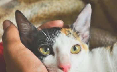Niereninsuffizienz bei der Katze