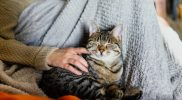 DCM – Dilatative Kardiomyopathie bei der Katze