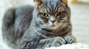 UCM – Unklassifizierte Kardiomyopathie bei der Katze