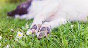 Ohnmachtsanfälle – Synkopen bei Hund und Katze