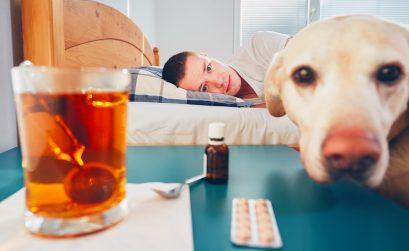 Coronavirus bei Hund und Katze