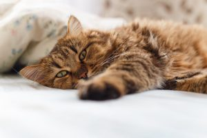 Katze Tabletten geben