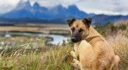 Vergrößertes Herz beim Hund – Lebenserwartung