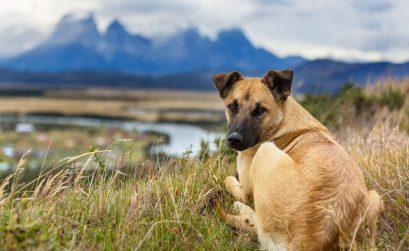 vergrößertes Herz Hund lebenserwartung