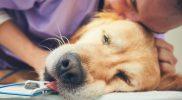 Narkose bei Hund und Katze mit Herzerkrankung