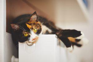 SDMA bei Katzen