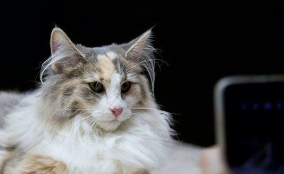 Wann mit der Katze zum Kardiologen