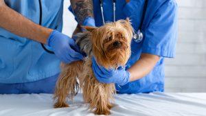Wann mit dem Hund zum Kardiologen